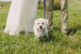 Emily Denver Wedding Photographer_0006
